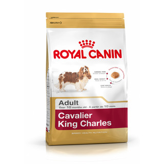 Royal Canin Canine Adult Cavalier King Charles