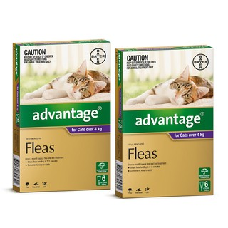 Advantage for Cats Over 4kg (Purple)[Size:12 Pack]